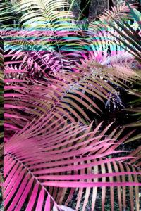 """""""Botanical, 8187_1(Magenta)"""" 2014"""