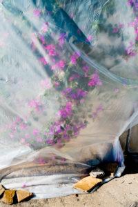 """""""Flower Shelter"""" 2014"""