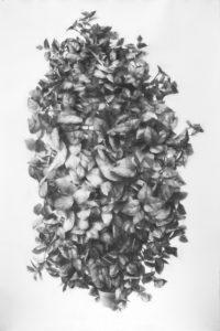 """Tall Plant"" 2015"