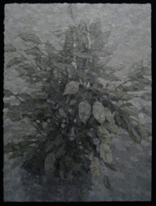 """Ficus"" 2008"