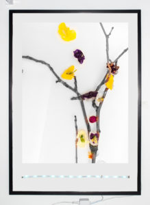 """Untitled (Branch Flowers Ice)"" 2013"