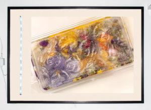 """Untitled (Edible Flowers)"" 2013"