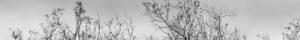 """Northwest Trees (Scroll)"" 2010"