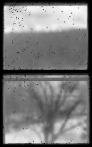 Bug Window II, 1989,