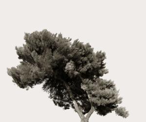 """""""Tree Portrait_4"""" 2012"""