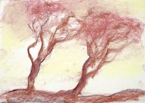 """""""Trees"""" 2007"""