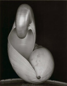"""""""Shell (14S)"""" 1927"""