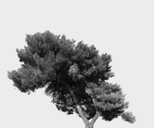 """""""Tree Portrait #22"""" 2012"""
