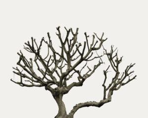 """""""Tree Portrait_33"""" 2012"""