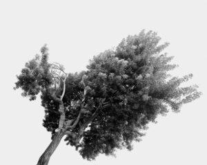 """""""Tree Portrait_21"""" 2012"""